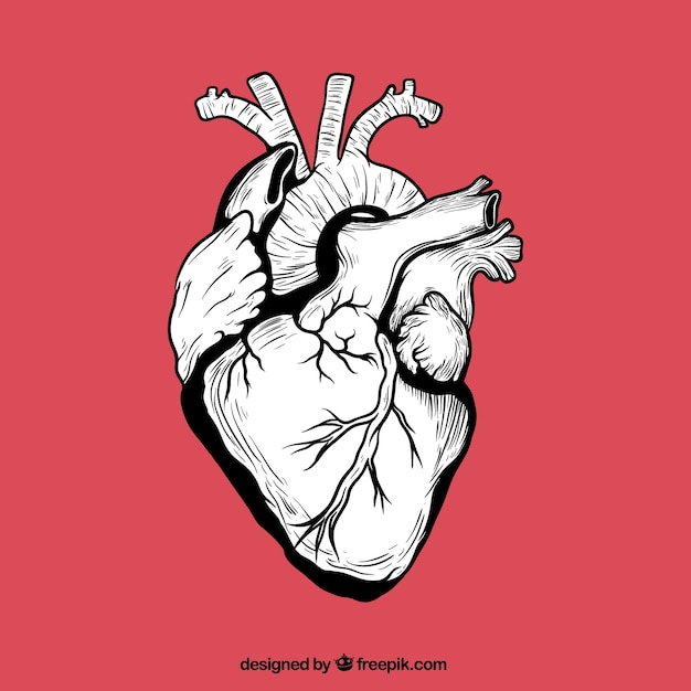 hand drawn human heart vector free download rh freepik com human heart vector graphics human heart vector icon