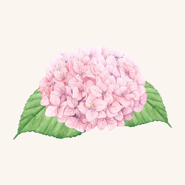 Hand drawn hydrangea flower isolated