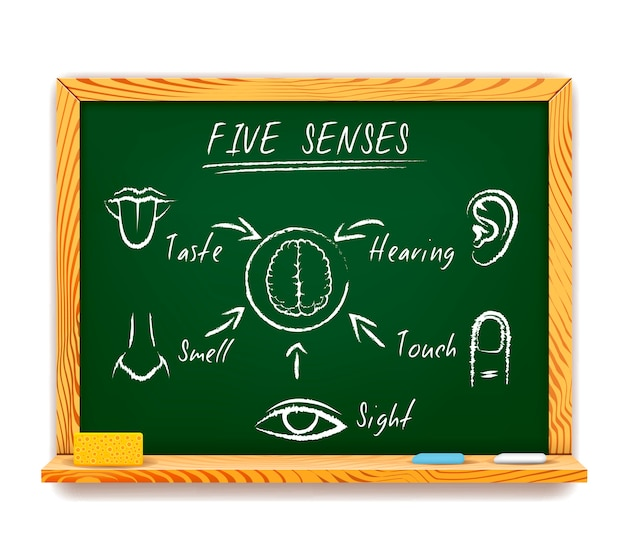 Hand-drawn infographic on chalkboard of the five senses depicting sight, touch, smell, taste and hearing with arrows pointing to a human brain Free Vector