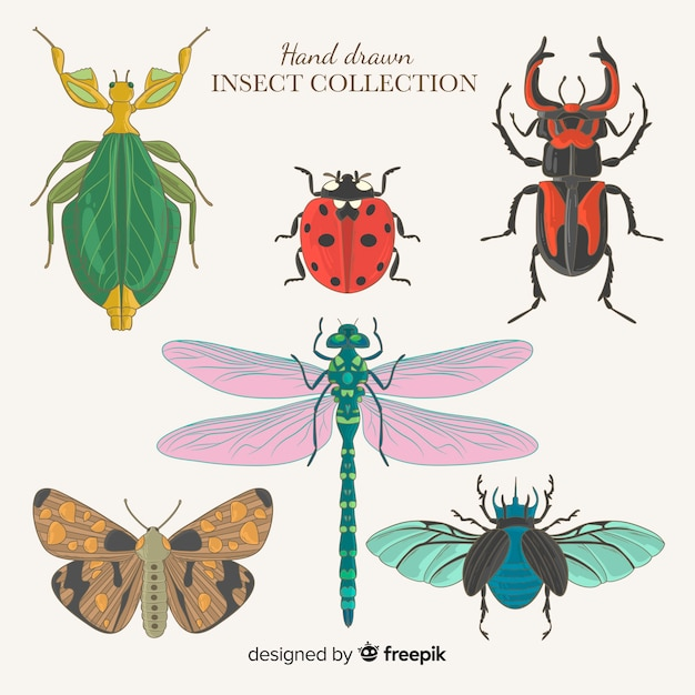 Hand drawn insect collection Free Vector