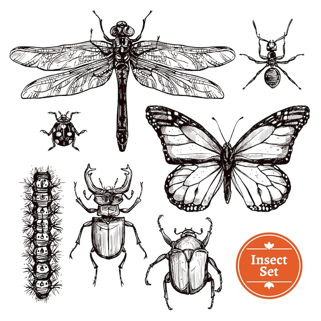 Hand drawn insect set Free Vector