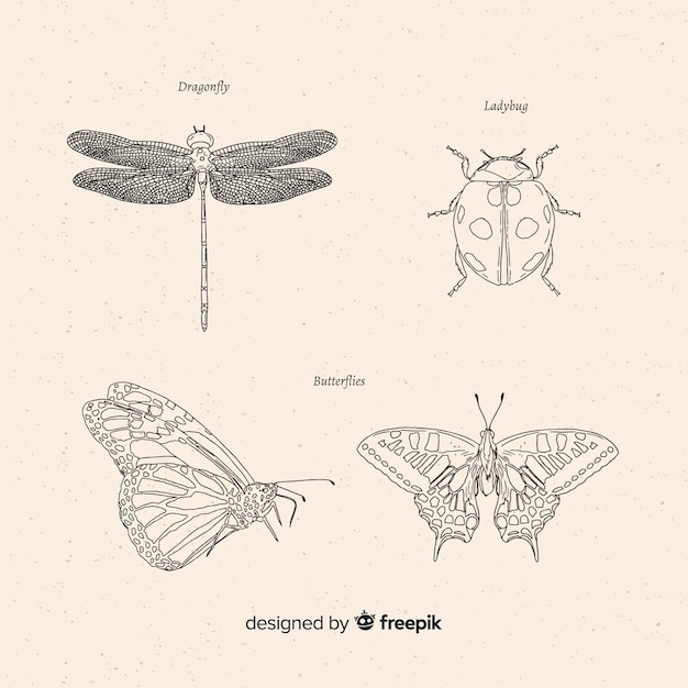 Hand drawn insect sketches collection Free Vector