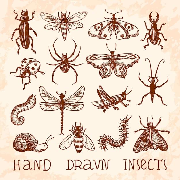 手描きの昆虫コレクション 無料ベクター
