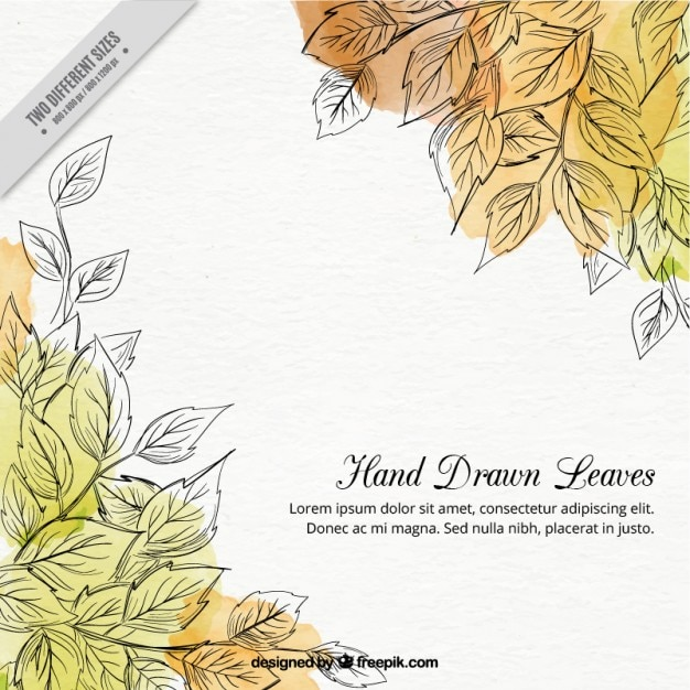 Hand drawn leaves background with waterocolor\ stains
