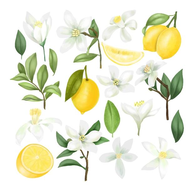 Рисованные лимоны, ветви лимонного дерева, листья и цветы лимона клипарт, изолированные на белом фоне Premium векторы