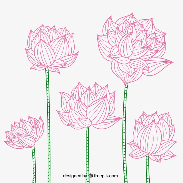 Hand Drawn Lotus Flowers Vector Premium Download