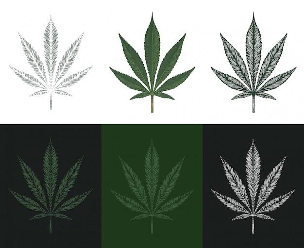 手描きのマリファナの葉。大麻葉のセット Premiumベクター