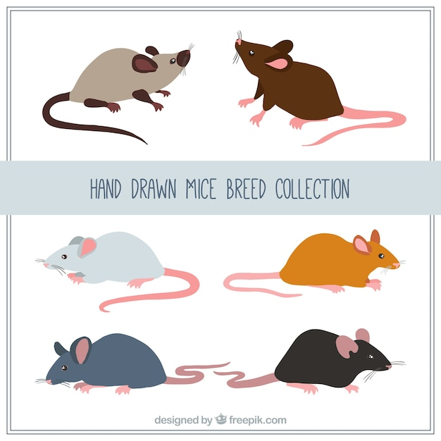 Hand drawn mice breed collection Free Vector