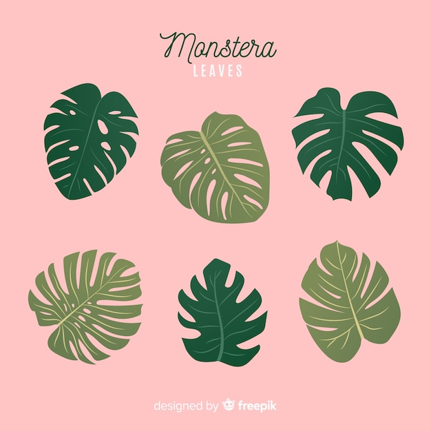 Hand drawn monstera leaves pack Premium Vector
