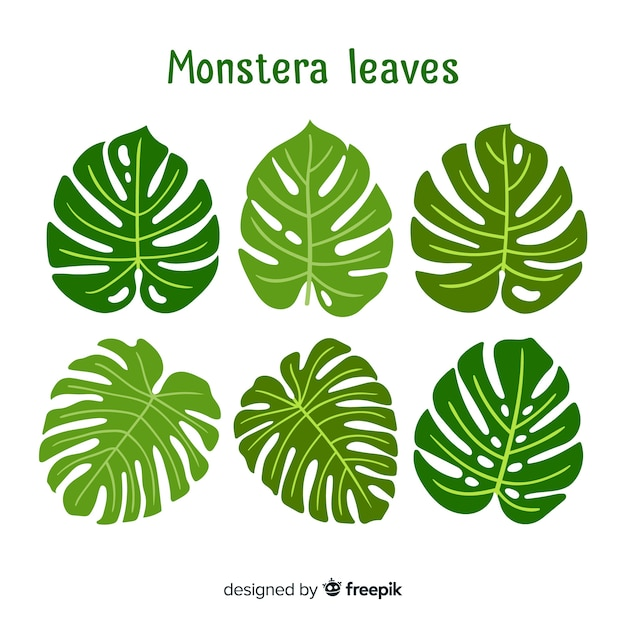 Hand drawn monstera leaves Free Vector