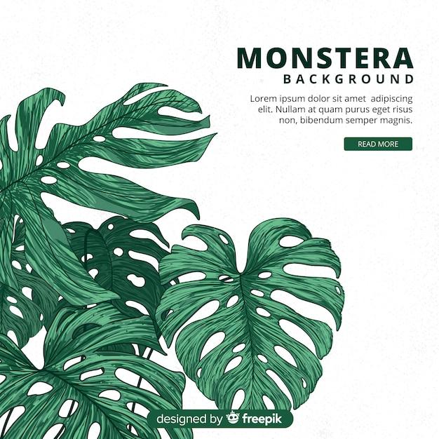 Hand drawn monstera leaves Premium Vector