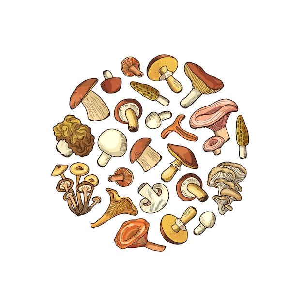 Рисованной грибы в форме круга Premium векторы