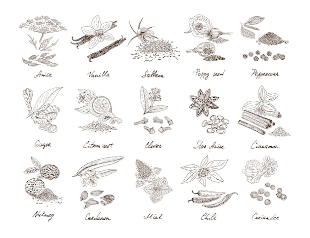 Hand drawn natural spices set Free Vector