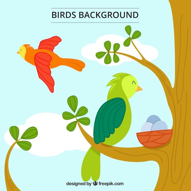 Disegnata a mano belle pappagalli sfondo Vettore gratuito