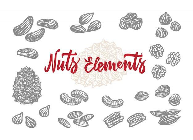 Набор элементов рисованной орехи Бесплатные векторы