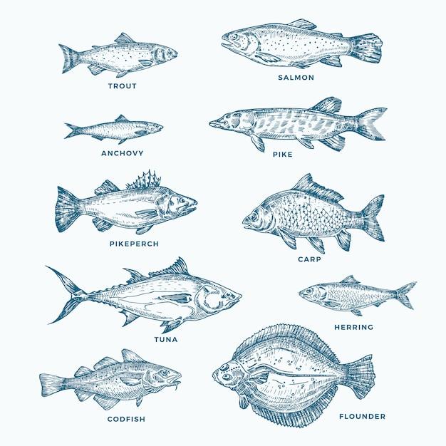 手描きの海または海と川の10魚セット。サーモンとマグロまたはパイクとアンチョビ、ニシン、マス、コイスケッチシルエットのコレクション。分離されました。 Premiumベクター