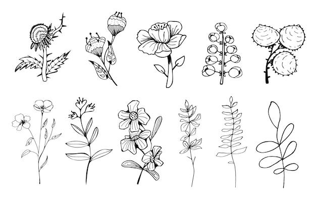 Ручной обращается наброски элегантность цветы иллюстрации. Premium векторы
