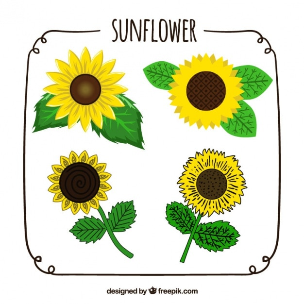 Hand-drawn pack of four sunflowers with\ different designs