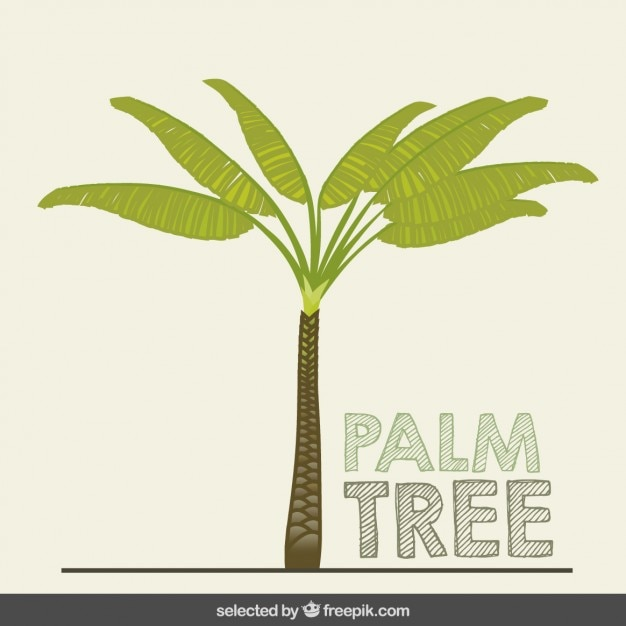 Hand drawn palm tree Vector | Free Download