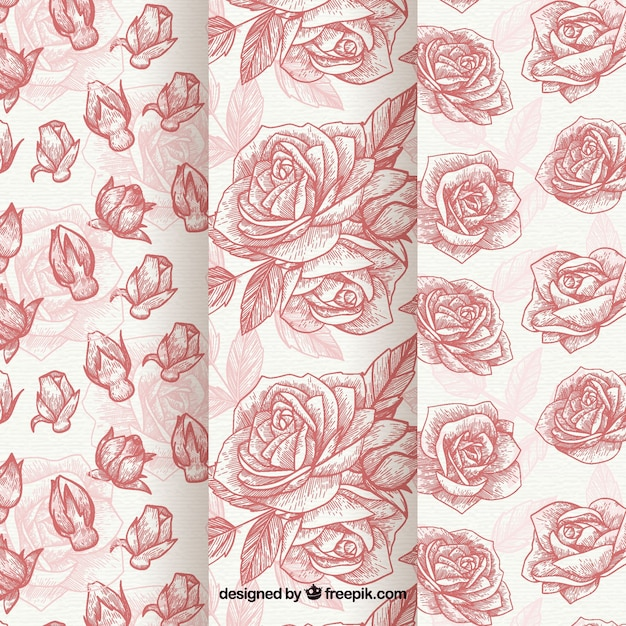 Hand drawn patterns of roses set