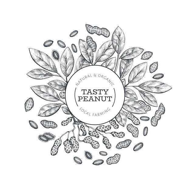 Ручной обращается арахисовая ветвь и шаблон дизайна ядер. органические продукты питания векторные иллюстрации на белом фоне. ретро гайка фон. гравировка в стиле ботанического рисунка. Premium векторы