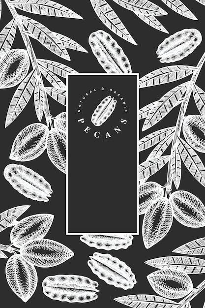Hand drawn pecan branch and kernels. organic food vector illustration isolated on chalk board. retro nut illustration. engraved style botanical picture. Premium Vector