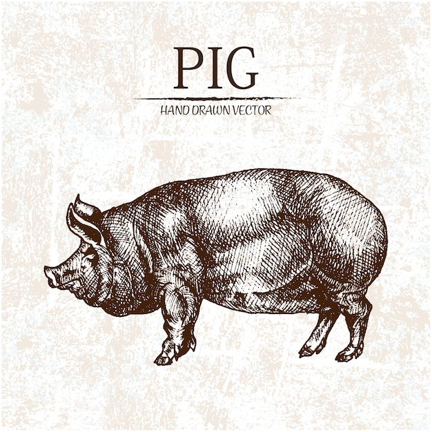 hand drawn pig design vector free download