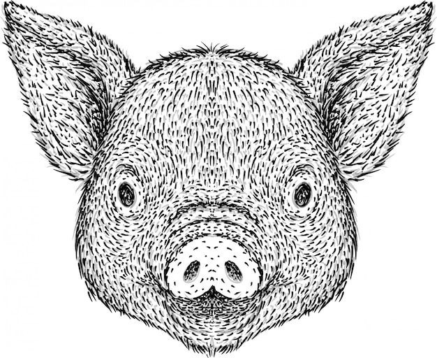 Hand drawn pig head illustration Premium Vector