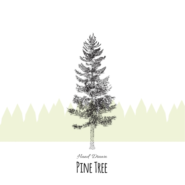 Hand drawn pine tree background Vector   Premium Download