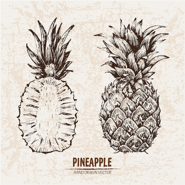 Hand drawn pineapple collection Free Vector