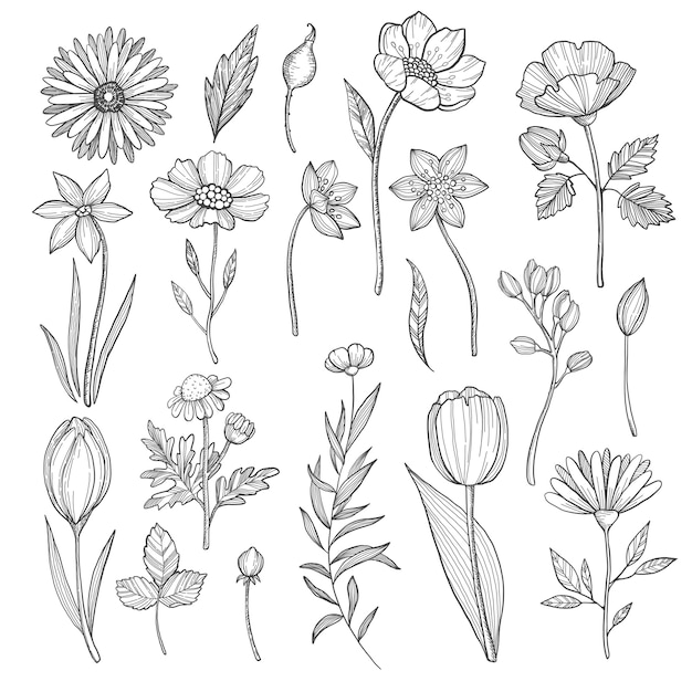 Hand drawn plants. vector pictures isolate on white Premium Vector