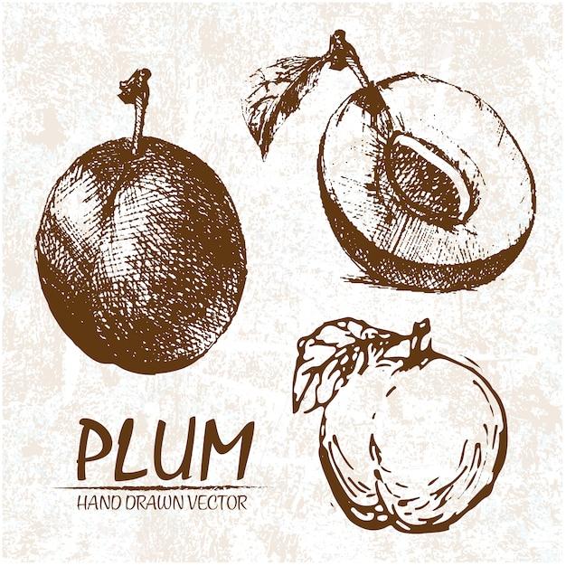 Hand drawn plum design Free Vector