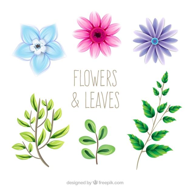 Pretty Flowers Drawn Flowers Healthy