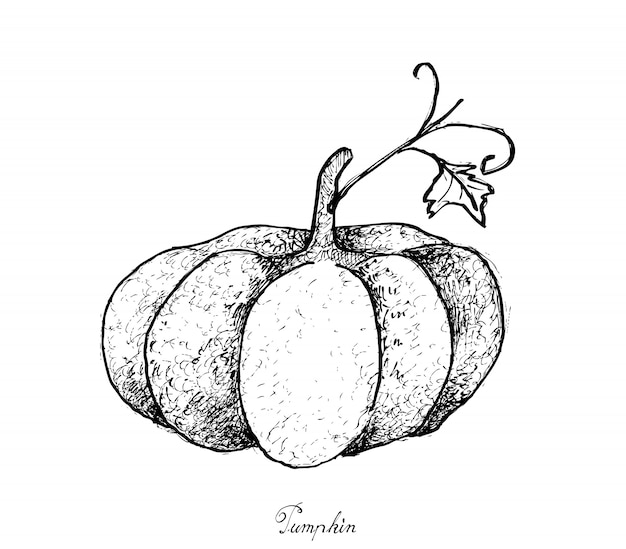 Hand drawn of pumpkins on a white background Premium Vector