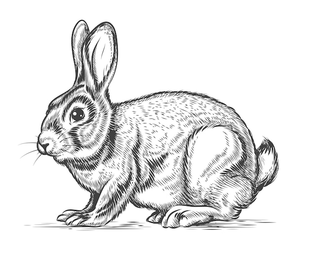 Coniglio disegnato a mano nello stile dell'incisione. coniglietto e lepre, schizzo di design vintage Vettore gratuito