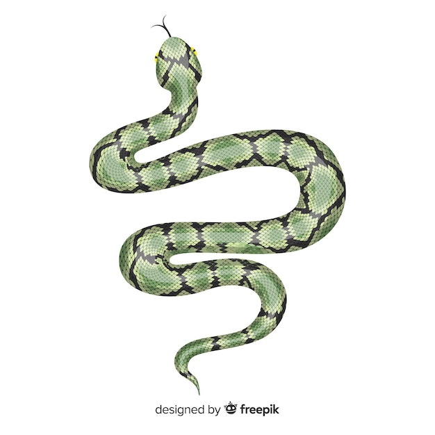 Hand drawn realistic snake illustration Free Vector