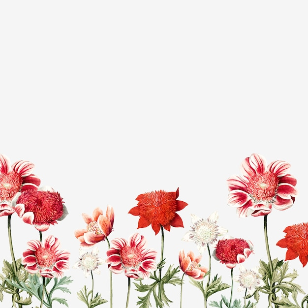 Hand drawn red and white anemone flower frame Vector | Free Download