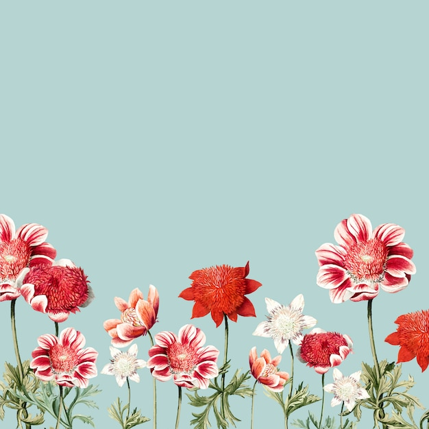 Hand drawn red and white anemone flower frame Free Vector