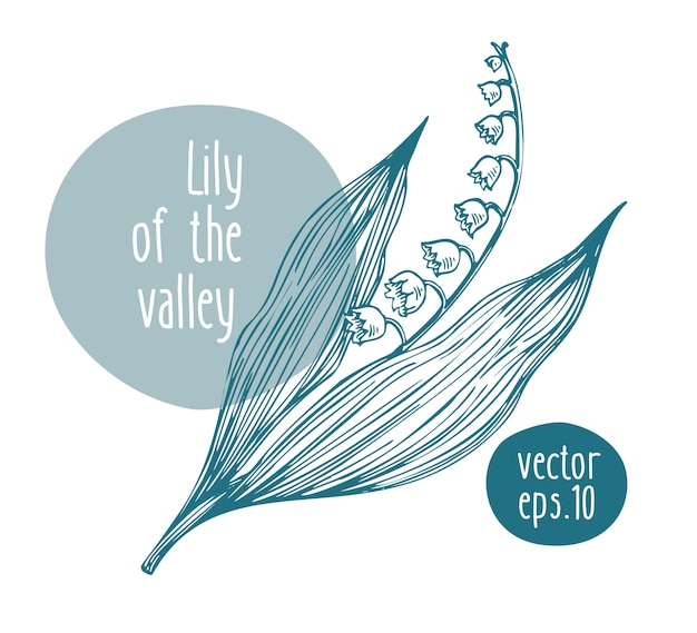 Hand drawn retro lily of the valley. Premium Vector