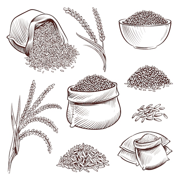 Hand drawn rice. doodle sack and. sketch rice ears vector set illustration Premium Vector