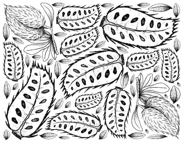 Рука нарисованные спелые плоды сметанного яблока Premium векторы
