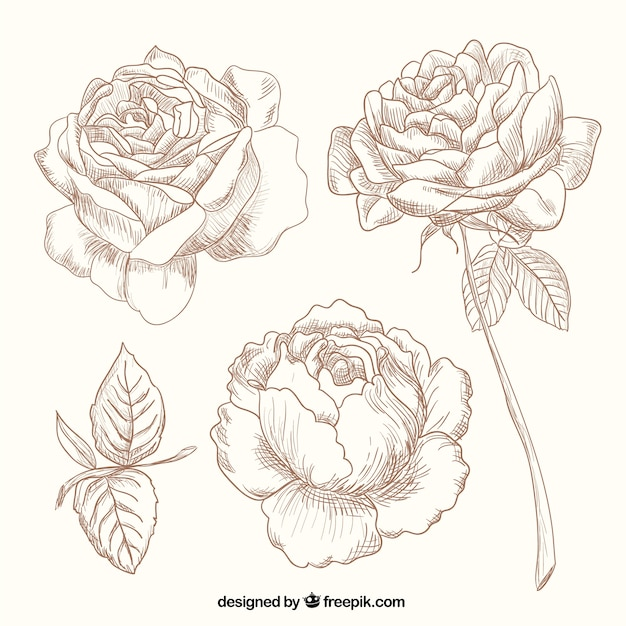 Hand drawn roses free vector