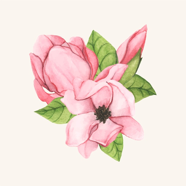 Hand Drawn Saucer Magnolia Flower Isolated Vector Free Download