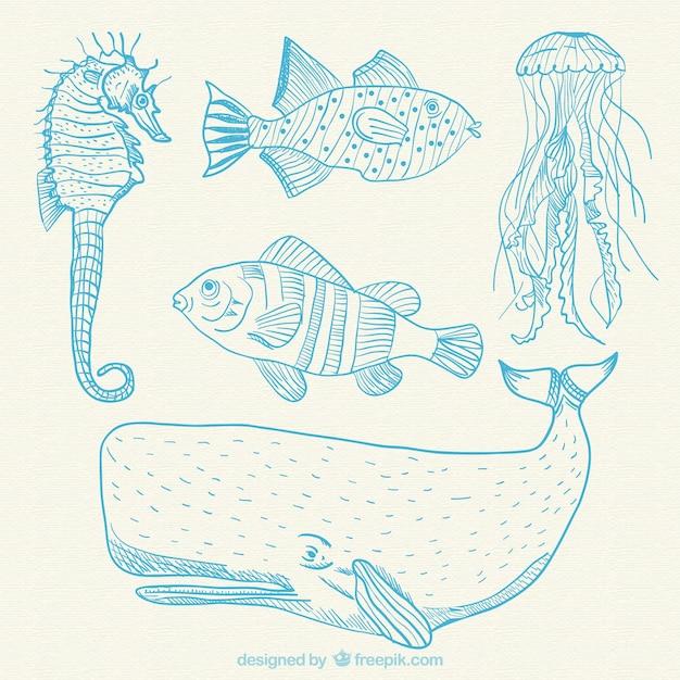 Hand drawn sea animals Free Vector