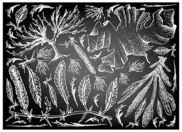 Hand drawn of sea vegetables or seaweed on chalkboard Premium Vector