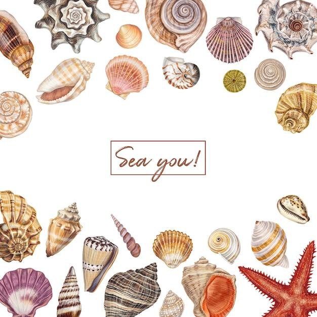 手描き貝殻セット Premiumベクター