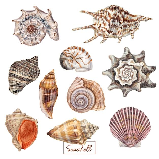 Hand drawn seashell set Premium Vector