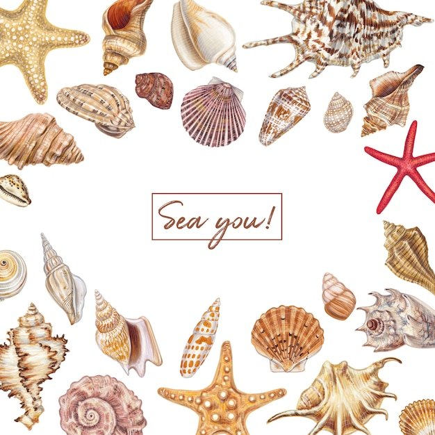 Hand drawn seashell set Premium Vector