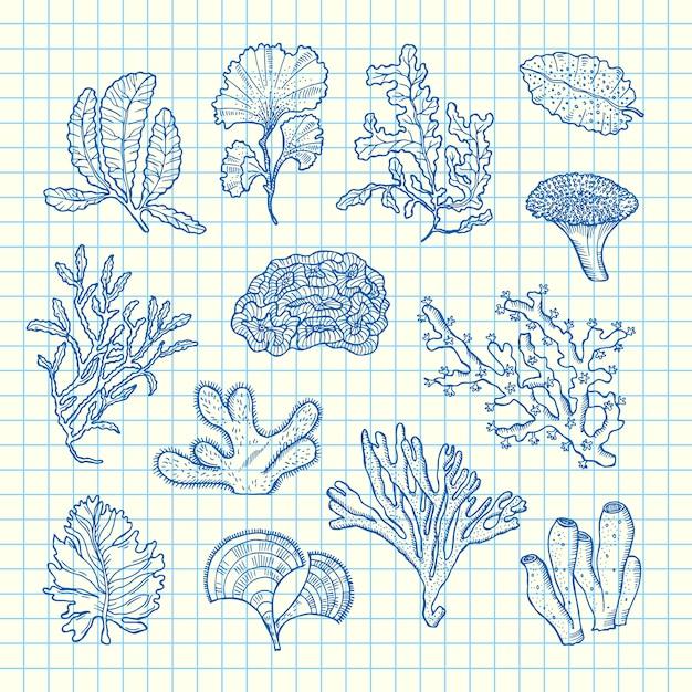 Набор рисованной водорослей Premium векторы