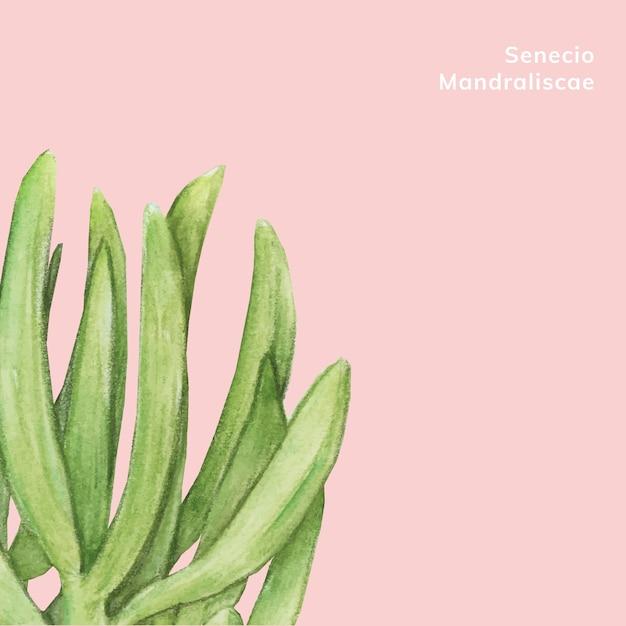 Hand drawn senecio mandraliscae succulent Free Vector